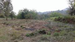 فروش یک قطعه زمین در املش