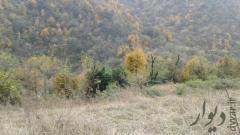 فروش دو هزار متر زمین جنگلی