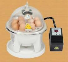 فروش ویژه دستگاه جوجه کشی خانگی اتوماتیک