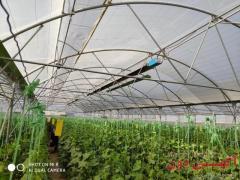 بخاری تابشی گازی سقفی گلخانه گرماتاب