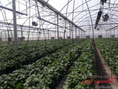 گرماتاب تابشی گلخانه ای