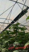 هیتر تابشی سقفی گلخانه