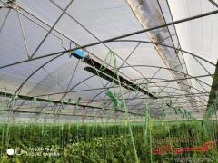 گرمایش تابشی سقفی گلخانه